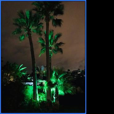 Villa Magica 3 palms at night